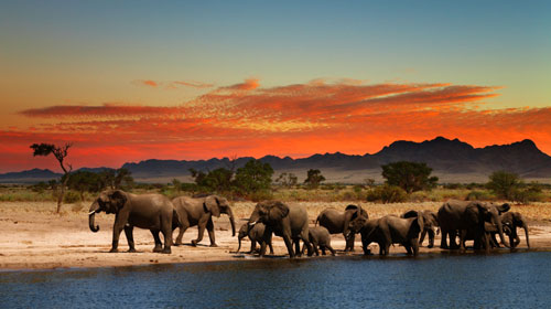 Pacotes de viagens com Grupo Brasileiros na Africa