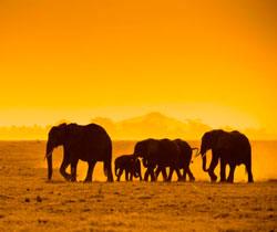 Nossa agência de viagem é especializada em África