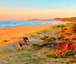Oceania | Agência de viagem e turismo ViaBR