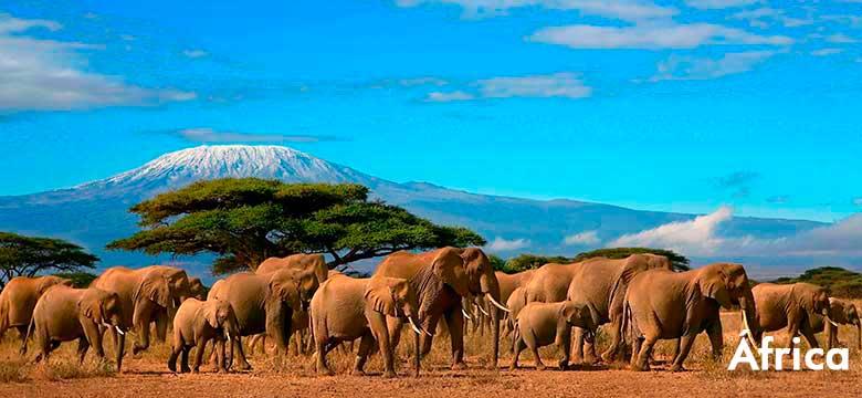 Pacote de viagem para África |Agência de viagem e turismo | ViaBr