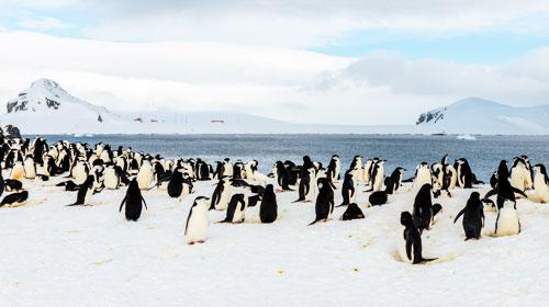 Viagem para Antártica com cruzeiro