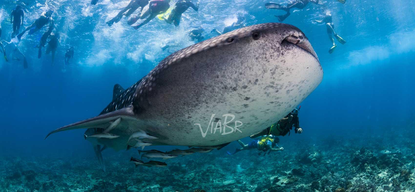 Pacote de viagem para Ilhas Maldivas